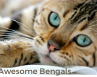 Awesome bengals logo